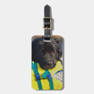 USA, California. Newfoundland With Life Vest Luggage Tag