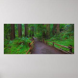 USA, California. Path Among Redwoods Poster