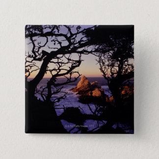 USA, California, Point Lobos, cypress tree and 15 Cm Square Badge