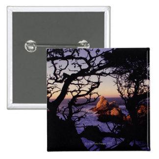 USA, California, Point Lobos, cypress tree and 15 Cm Square Badge