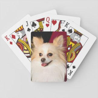 USA, California. Pomeranian Portrait With Red Poker Deck