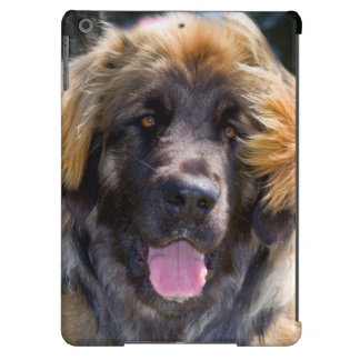 USA, California. Portrait Of Leonberger Sitting Case For iPad Air