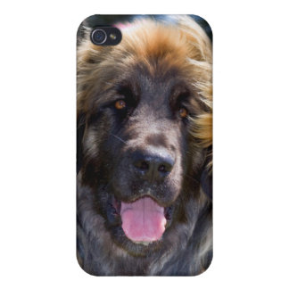 USA, California. Portrait Of Leonberger Sitting Covers For iPhone 4