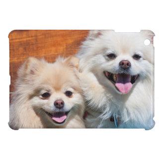 USA, California. Portrait Of Two Pomeranians Case For The iPad Mini