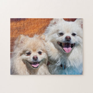 USA, California. Portrait Of Two Pomeranians Jigsaw Puzzle