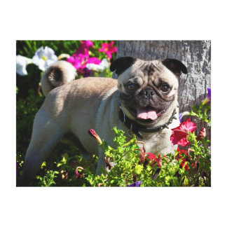 USA, California. Pug In Flower Garden Stretched Canvas Prints