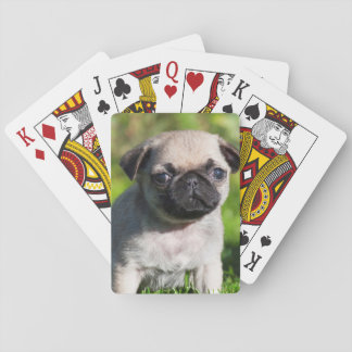 USA, California. Pug Puppy Looking At You Poker Deck