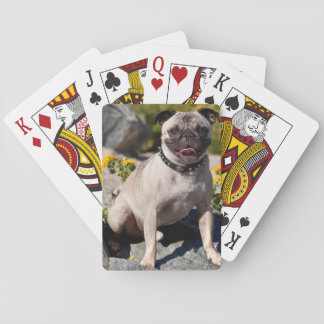USA, California. Pug Sitting On Boulder Poker Deck