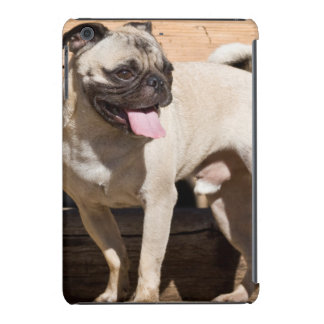 USA, California. Pug Standing On Wooden Bench iPad Mini Retina Cover