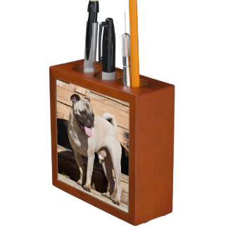 USA, California. Pug Standing On Wooden Bench Pencil Holder