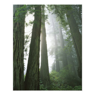 USA, California, Redwood National Park, Photo