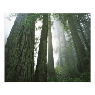 USA, California, Redwood National Park, Photo Art