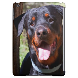 USA, California. Rottweiler By A Tree