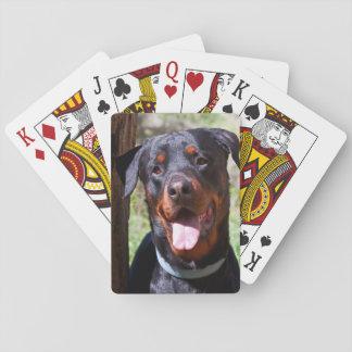USA, California. Rottweiler By A Tree Poker Deck