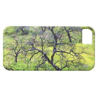 USA, California, San Diego. A burnt oak forest iPhone 5 Case