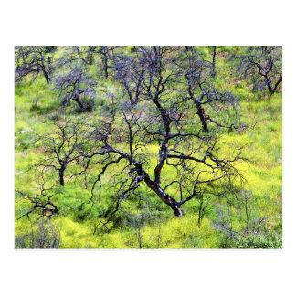 USA, California, San Diego. A burnt oak forest Postcard