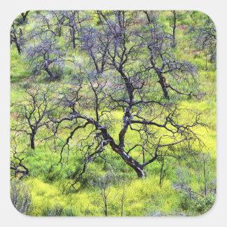 USA, California, San Diego. A burnt oak forest Square Sticker