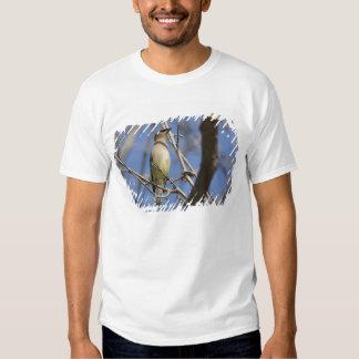 USA - California - San Diego - Cedar Waxwing 2 T Shirt
