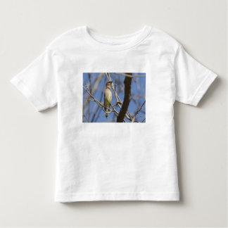 USA - California - San Diego - Cedar Waxwing 2 Tshirt