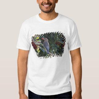 USA - California - San Diego - Cedar Waxwing Tshirt