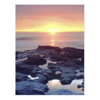 USA, California, San Diego. Sunset Cliffs tide Postcard