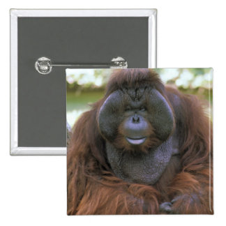 USA, California, San Diego Zoo. Captive 15 Cm Square Badge