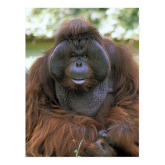USA, California, San Diego Zoo. Captive Postcard