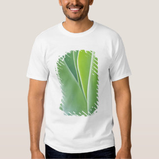 USA, California, San Fracisco, Golden Gate T Shirt
