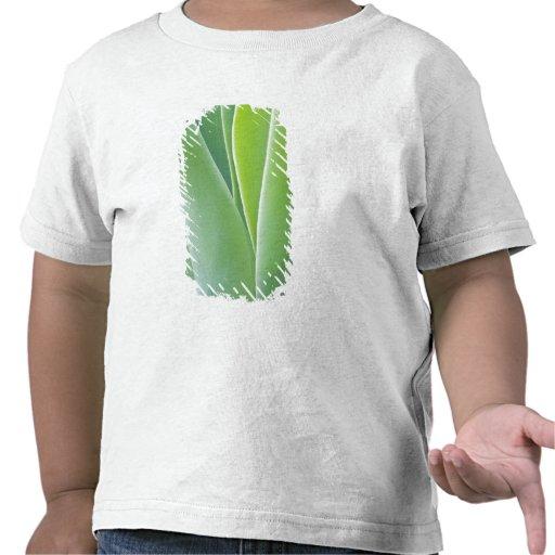 USA, California, San Fracisco, Golden Gate T-shirts