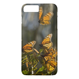 USA, California, San Luis Obispo County. Monarch iPhone 7 Plus Case