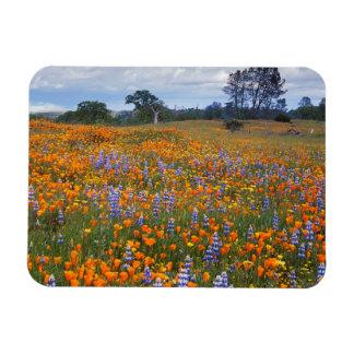 USA, California, Santa Margarita, Avenales Rectangular Photo Magnet
