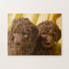 USA, California. Standard Poodle Puppies Jigsaw Puzzle