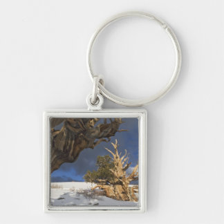 USA, California, White Mountains. Ancient Silver-Colored Square Key Ring