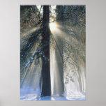 USA, California, Yosemite National Park, Sun Posters