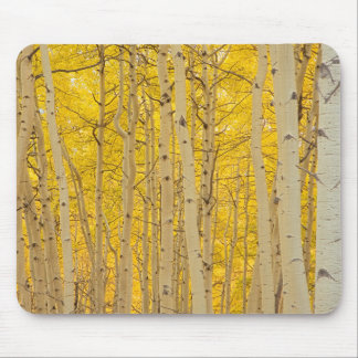 USA, Colorado. Aspens In Gunnison National Mouse Pad