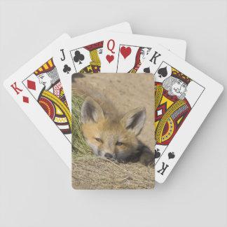USA, Colorado, Breckenridge. Alert red fox Poker Deck