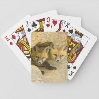USA, Colorado, Breckenridge. Curious red fox Poker Deck