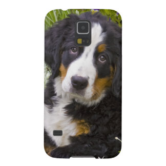 USA, Colorado, Breckenridge. Female Bernese Galaxy S5 Cases