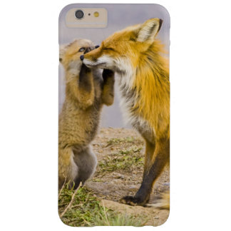 USA, Colorado, Breckenridge. Red fox mother 2 Barely There iPhone 6 Plus Case