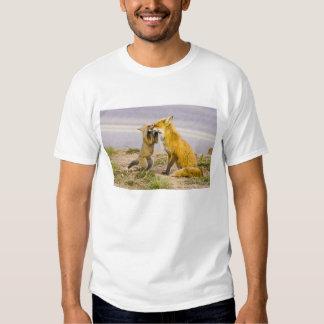 USA, Colorado, Breckenridge. Red fox mother 2 T-shirts
