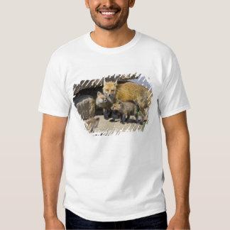 USA, Colorado, Breckenridge. Red fox mother 4 T Shirts