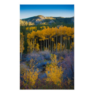 USA, Colorado. Bright Yellow Aspens in Rockies Poster