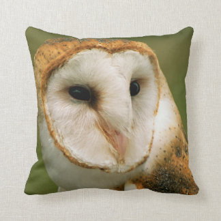 USA, Colorado, Broomfield. Barn owl Cushion