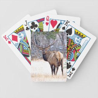 USA, Colorado, Bull Elk Looking Back Poker Deck