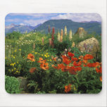 USA, Colorado, Crested Butte. Poppies and lupine Mouse Pad