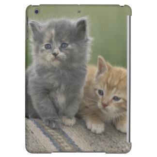 USA, Colorado, Divide. Two barn kittens pose on