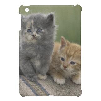 USA, Colorado, Divide. Two barn kittens pose on iPad Mini Cover