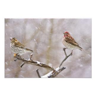 USA, Colorado, Frisco. Female and male Photo Print
