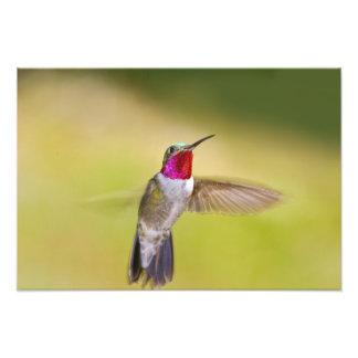 USA, Colorado, Frisco. Frontal view of male Photograph
