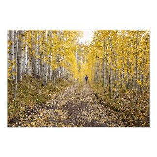 USA, Colorado, Gunnison National Forest near Photo